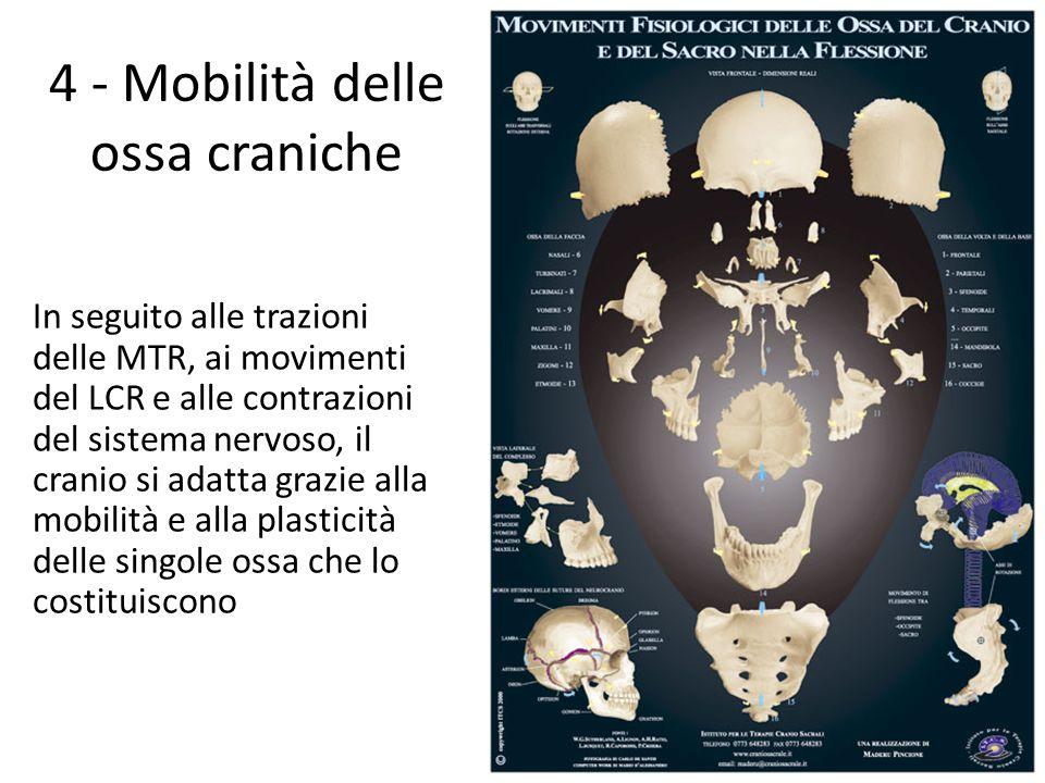4 - Mobilità delle ossa craniche In seguito alle trazioni delle MTR, ai movimenti del LCR e alle contrazioni del sistema nervoso, il cranio si adatta