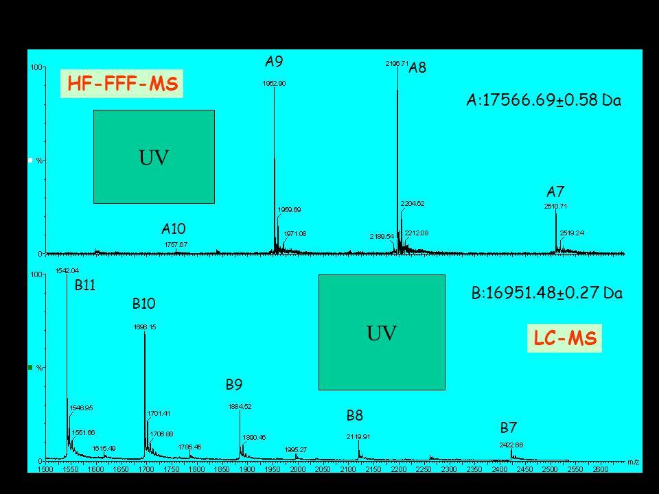 B11 B10 B9 B8 B7 A10 A9 A8 A7 A:17566.69±0.58 Da B:16951.48±0.27 Da HF-FFF-MS LC-MS UV