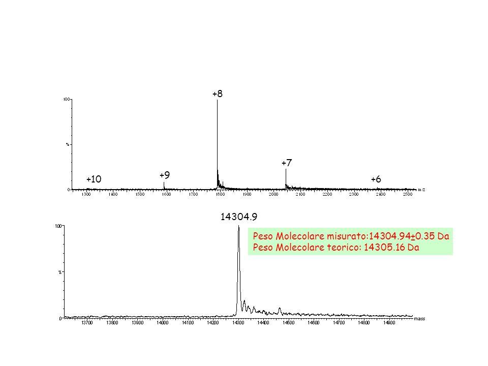 +8 +9 +7 +6+10 Peso Molecolare misurato:14304.94±0.35 Da Peso Molecolare teorico: 14305.16 Da 14304.9