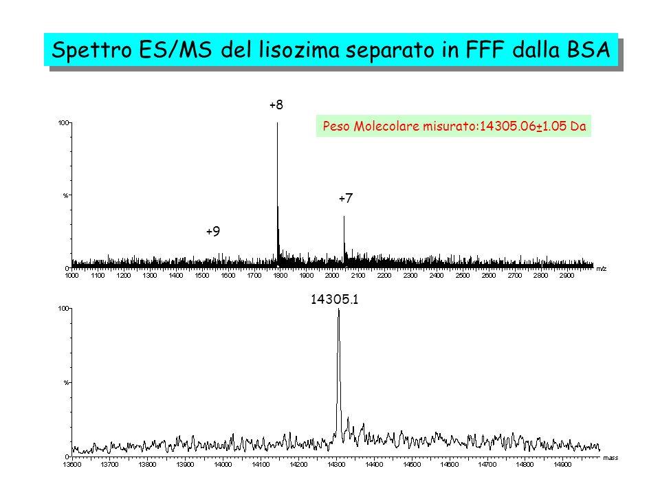 +8 +7 +9 Peso Molecolare misurato:14305.06±1.05 Da 14305.1 Spettro ES/MS del lisozima separato in FFF dalla BSA