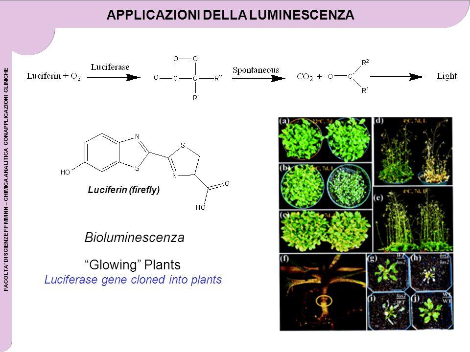 FACOLTA DI SCIENZE FF MM NN – CHIMICA ANALITICA CON APPLICAZIONI CLINICHE Luciferin (firefly) Glowing Plants Luciferase gene cloned into plants Bioluminescenza APPLICAZIONI DELLA LUMINESCENZA