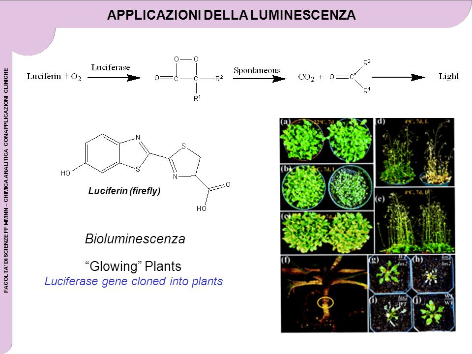 FACOLTA DI SCIENZE FF MM NN – CHIMICA ANALITICA CON APPLICAZIONI CLINICHE Luciferin (firefly) Glowing Plants Luciferase gene cloned into plants Biolum