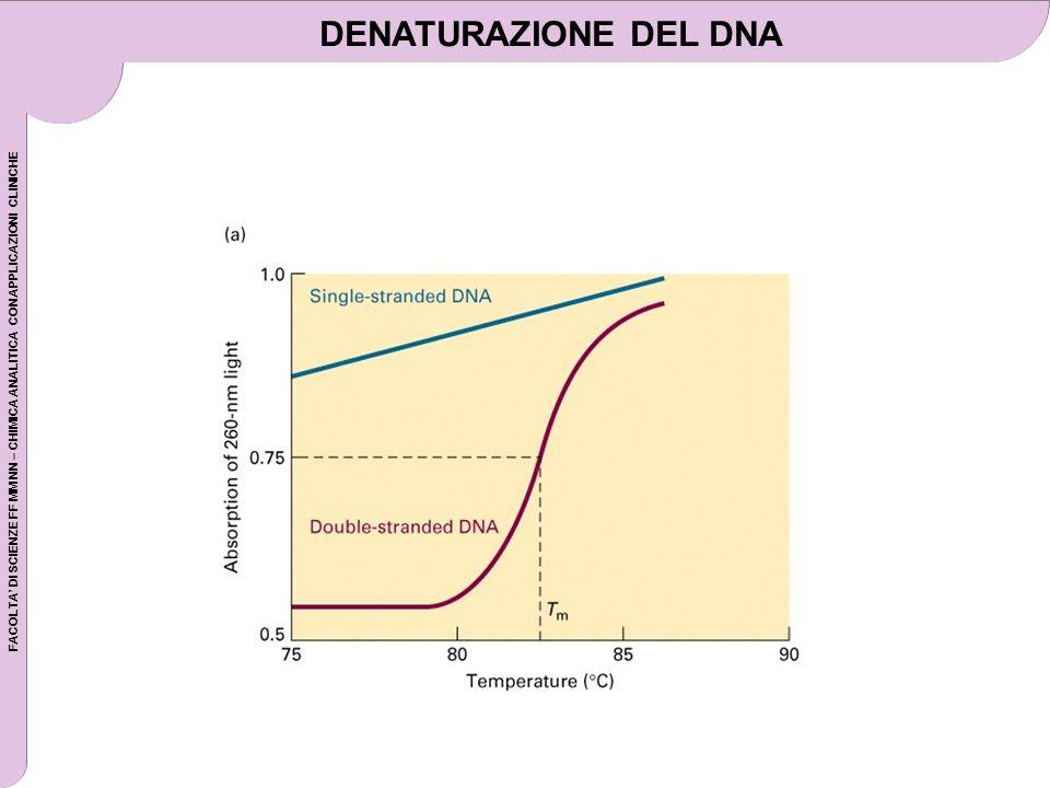 FACOLTA DI SCIENZE FF MM NN – CHIMICA ANALITICA CON APPLICAZIONI CLINICHE DENATURAZIONE DEL DNA