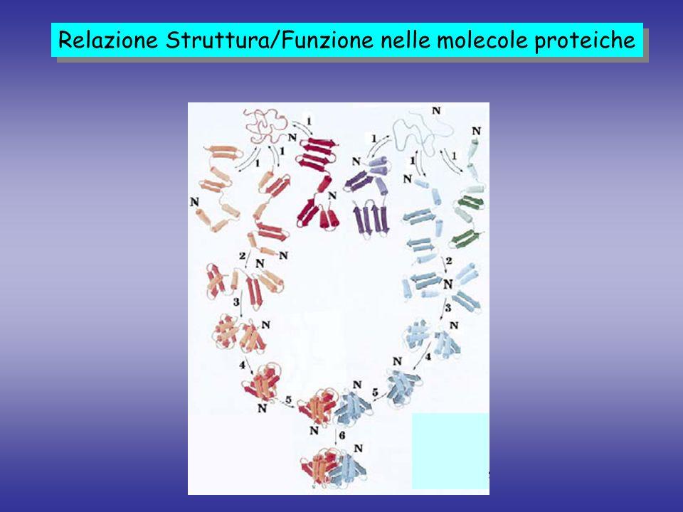 Condizioni Denaturanti Condizioni Pseudo-Native ES/MS e conformazione proteica A.E.