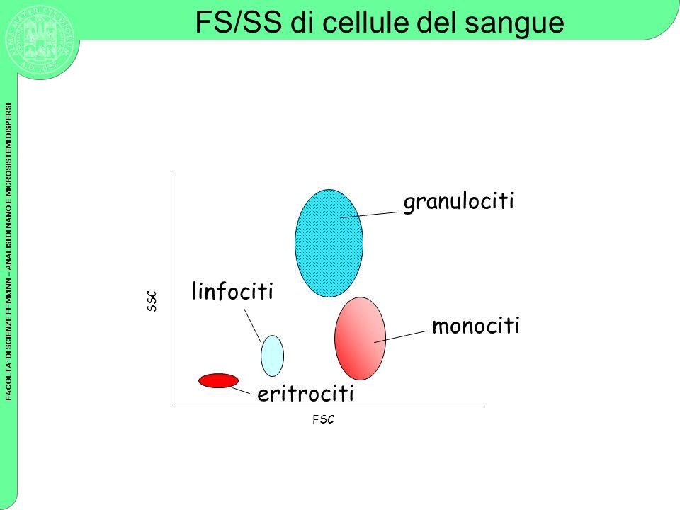 FACOLTA DI SCIENZE FF MM NN – ANALISI DI NANO E MICROSISTEMI DISPERSI FSC SSC linfociti granulociti monociti eritrociti FS/SS di cellule del sangue