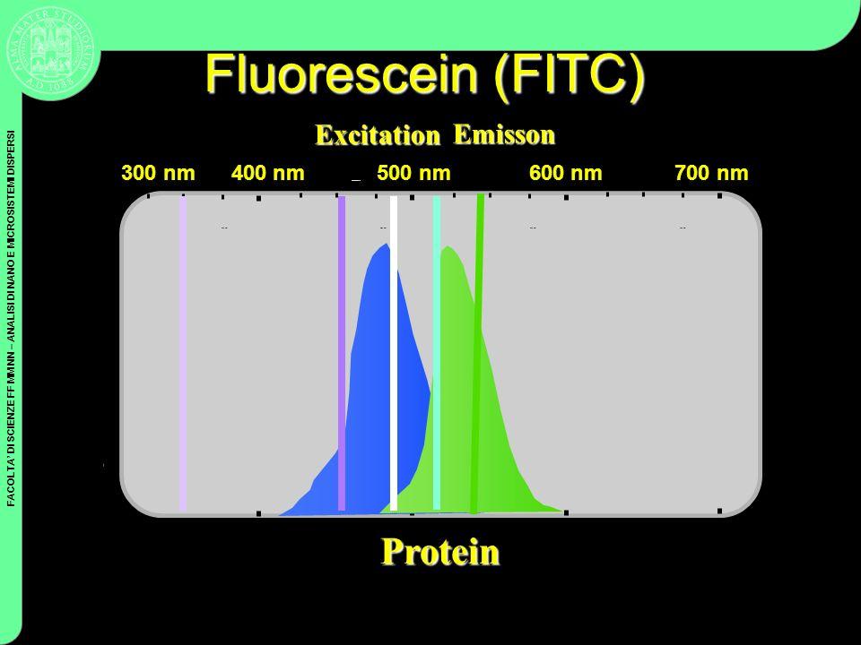 FACOLTA DI SCIENZE FF MM NN – ANALISI DI NANO E MICROSISTEMI DISPERSI Coulter Cytometry Fluorescein (FITC) 400 nm500 nm600 nm700 nm Wavelength Protein