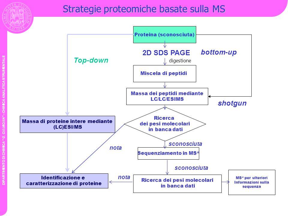 DIPARTIMENTO DI CHIMICA G. CIAMICIAN – CHIMICA ANALITICA STRUMENTALE Strategie proteomiche basate sulla MS Proteina (sconosciuta) Miscela di peptidi M