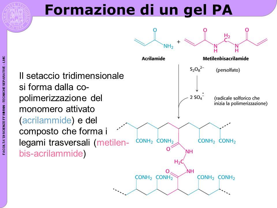 FACOLTA DI SCIENZE FF MM NN –TECNICHE SEPARATIVE – LMC Formazione di un gel PA Il setaccio tridimensionale si forma dalla co- polimerizzazione del mon