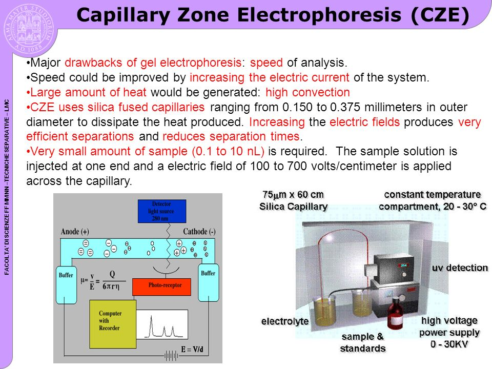 FACOLTA DI SCIENZE FF MM NN –TECNICHE SEPARATIVE – LMC Major drawbacks of gel electrophoresis: speed of analysis. Speed could be improved by increasin