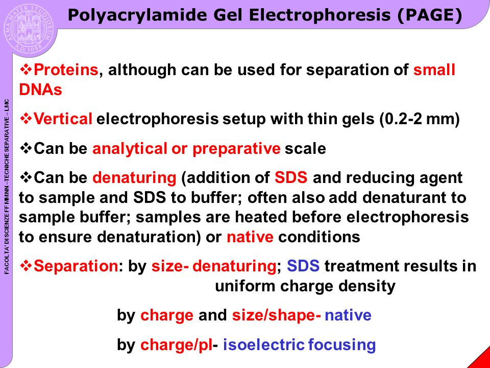 FACOLTA DI SCIENZE FF MM NN –TECNICHE SEPARATIVE – LMC Polyacrylamide Gel Electrophoresis (PAGE) Proteins, although can be used for separation of small DNAs Vertical electrophoresis setup with thin gels (0.2-2 mm) Can be analytical or preparative scale Can be denaturing (addition of SDS and reducing agent to sample and SDS to buffer; often also add denaturant to sample buffer; samples are heated before electrophoresis to ensure denaturation) or native conditions Separation: by size- denaturing; SDS treatment results in uniform charge density by charge and size/shape- native by charge/pI- isoelectric focusing