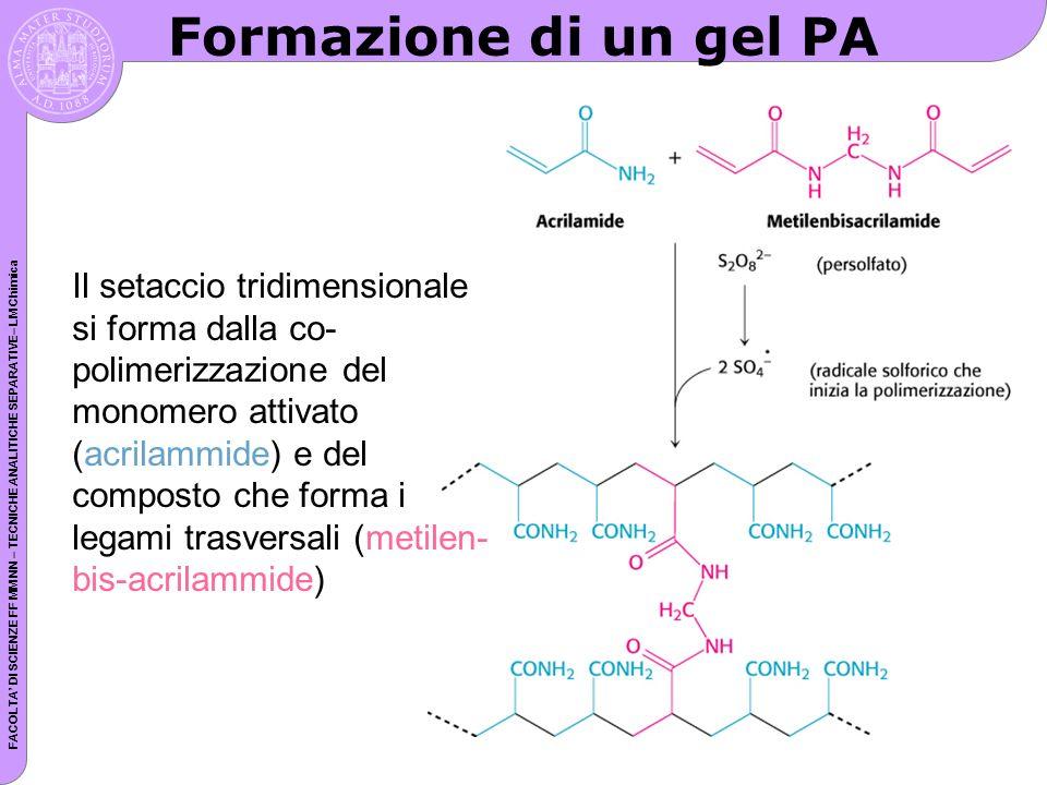 FACOLTA DI SCIENZE FF MM NN – TECNICHE ANALITICHE SEPARATIVE– LM Chimica Formazione di un gel PA Il setaccio tridimensionale si forma dalla co- polimerizzazione del monomero attivato (acrilammide) e del composto che forma i legami trasversali (metilen- bis-acrilammide)