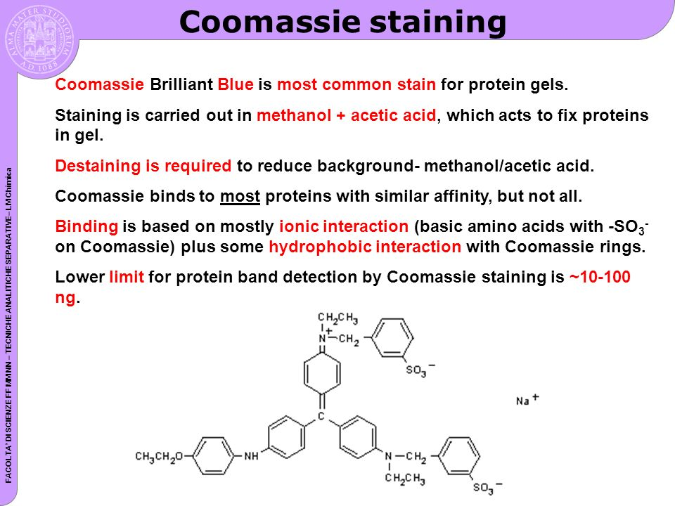 FACOLTA DI SCIENZE FF MM NN – TECNICHE ANALITICHE SEPARATIVE– LM Chimica Coomassie staining Coomassie Brilliant Blue is most common stain for protein