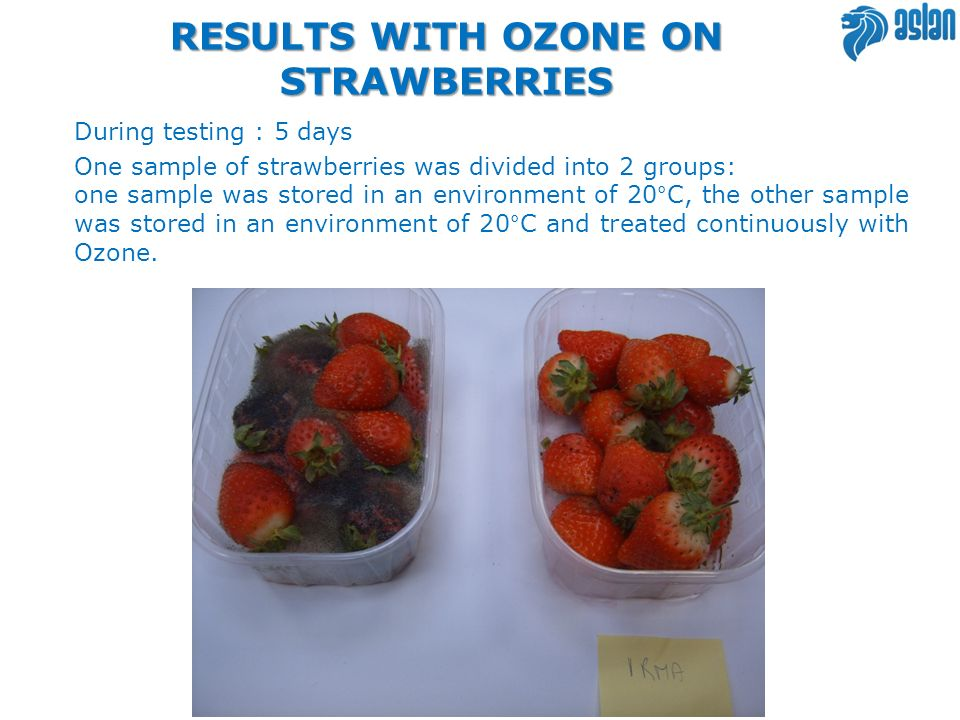 RESULTS WITH OZONE ON KIWI FRUIT Two halves of the same kiwi, both preserved at room temperature, the half kiwi sample on the right was treated continually with ozone, the half kiwi on the left was not treated with ozone, after 4 days, apart from the visible signs of drying out there is also the onset of mold.