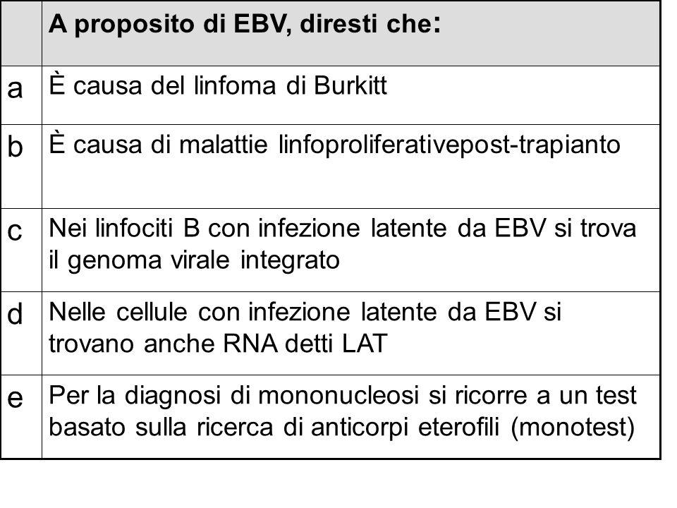 Per la diagnosi di mononucleosi si ricorre a un test basato sulla ricerca di anticorpi eterofili (monotest) e Nelle cellule con infezione latente da E