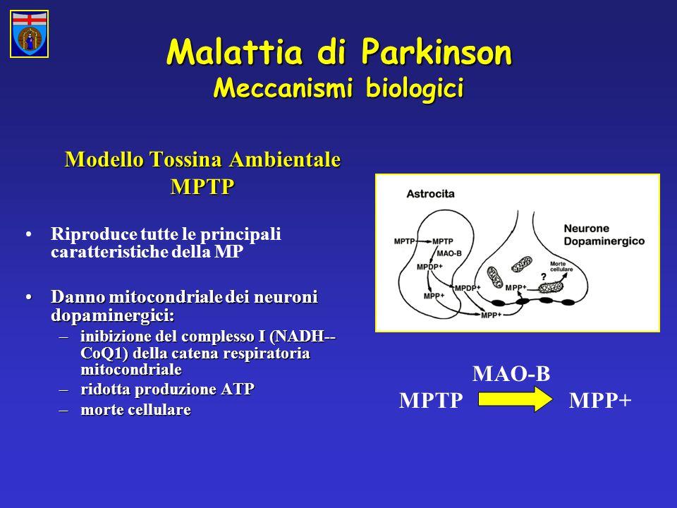 Malattia di Parkinson Meccanismi biologici Modello Tossina Ambientale MPTP Riproduce tutte le principali caratteristiche della MP Danno mitocondriale dei neuroni dopaminergici:Danno mitocondriale dei neuroni dopaminergici: –inibizione del complesso I (NADH-- CoQ1) della catena respiratoria mitocondriale –ridotta produzione ATP –morte cellulare MAO-B MPTP MPP+