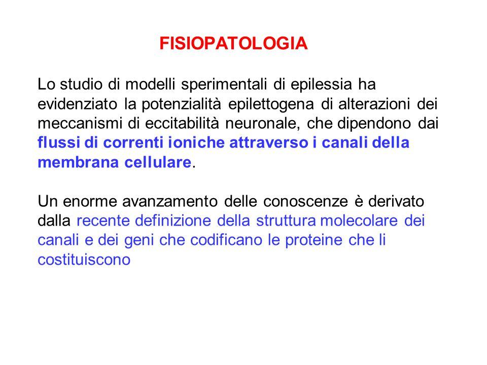FISIOPATOLOGIA Lo studio di modelli sperimentali di epilessia ha evidenziato la potenzialità epilettogena di alterazioni dei meccanismi di eccitabilit