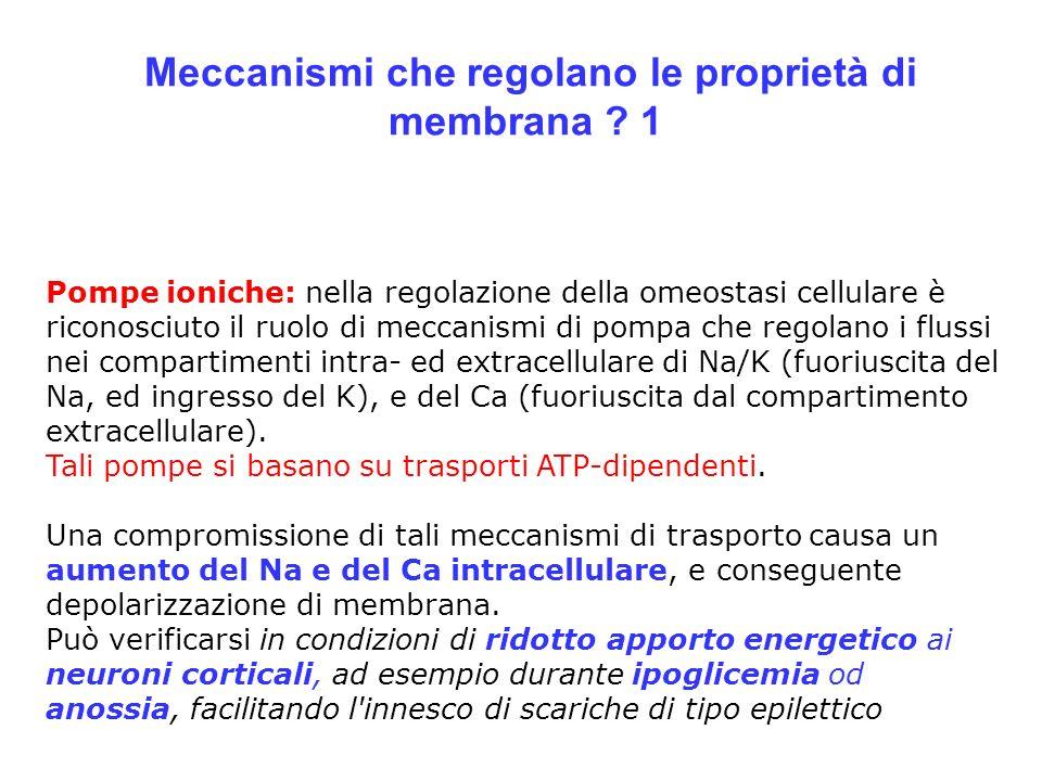 Meccanismi che regolano le proprietà di membrana ? 1 Pompe ioniche: nella regolazione della omeostasi cellulare è riconosciuto il ruolo di meccanismi