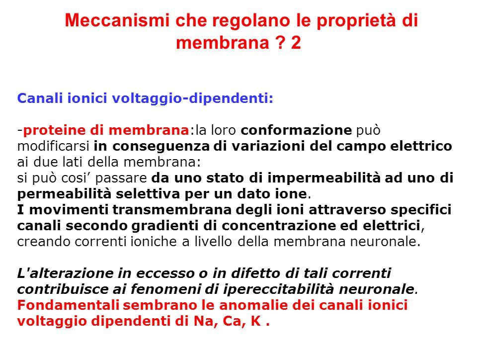 Meccanismi che regolano le proprietà di membrana ? 2 Canali ionici voltaggio-dipendenti: -proteine di membrana:la loro conformazione può modificarsi i