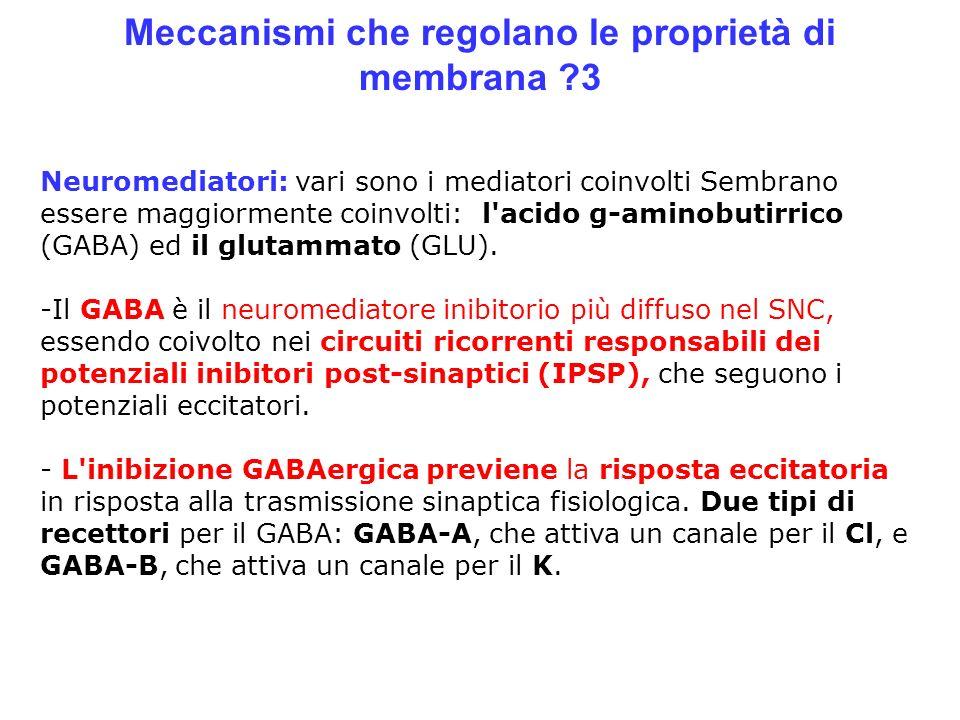 Meccanismi che regolano le proprietà di membrana ?3 Neuromediatori: vari sono i mediatori coinvolti Sembrano essere maggiormente coinvolti: l'acido g-