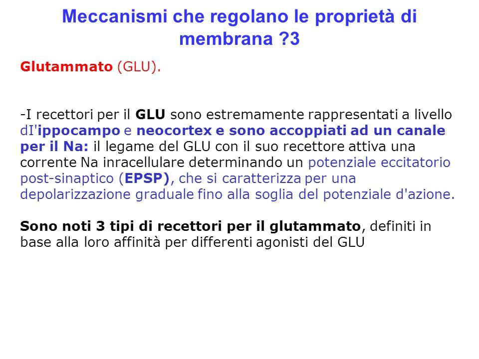 Meccanismi che regolano le proprietà di membrana ?3 Glutammato (GLU). -I recettori per il GLU sono estremamente rappresentati a livello dI'ippocampo e