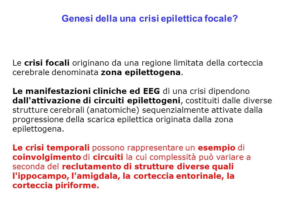 Genesi della una crisi epilettica focale? Le crisi focali originano da una regione limitata della corteccia cerebrale denominata zona epilettogena. Le