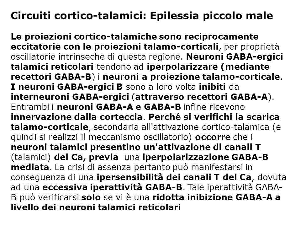 Circuiti cortico-talamici: Epilessia piccolo male Le proiezioni cortico-talamiche sono reciprocamente eccitatorie con le proiezioni talamo-corticali,