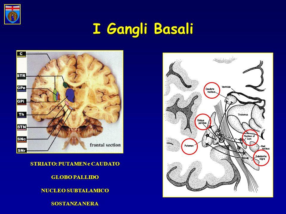 I Gangli Basali STRIATO: PUTAMEN e CAUDATO GLOBO PALLIDO NUCLEO SUBTALAMICO SOSTANZA NERA
