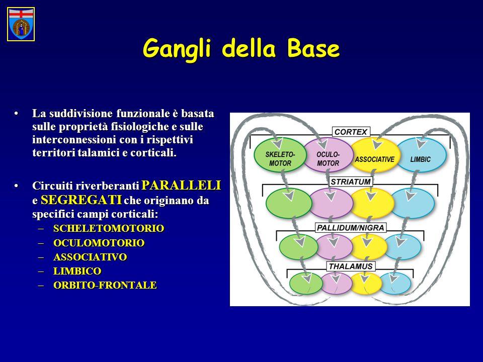 Gangli della Base La suddivisione funzionale è basata sulle proprietà fisiologiche e sulle interconnessioni con i rispettivi territori talamici e corticali.La suddivisione funzionale è basata sulle proprietà fisiologiche e sulle interconnessioni con i rispettivi territori talamici e corticali.