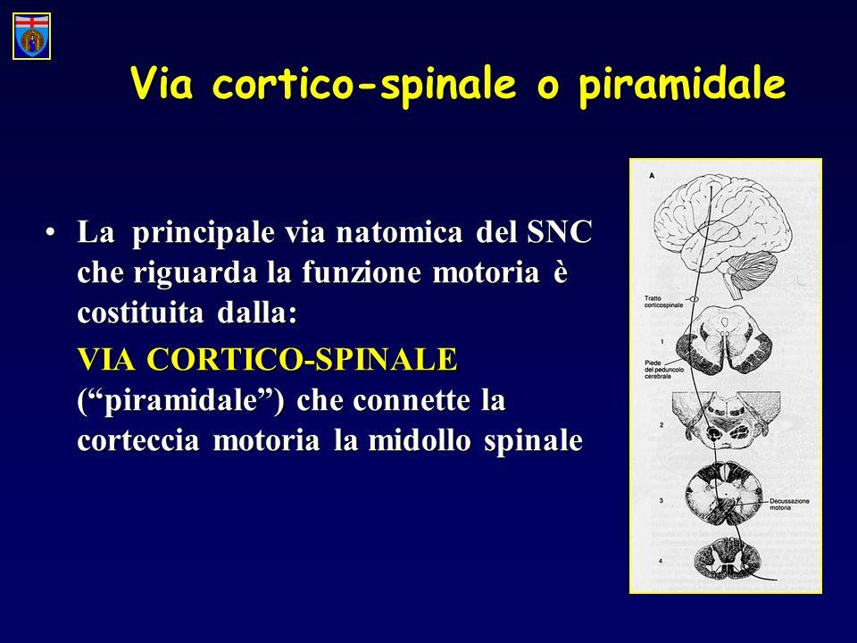 Via cortico-spinale o piramidale La principale via natomica del SNC che riguarda la funzione motoria è costituita dalla:La principale via natomica del