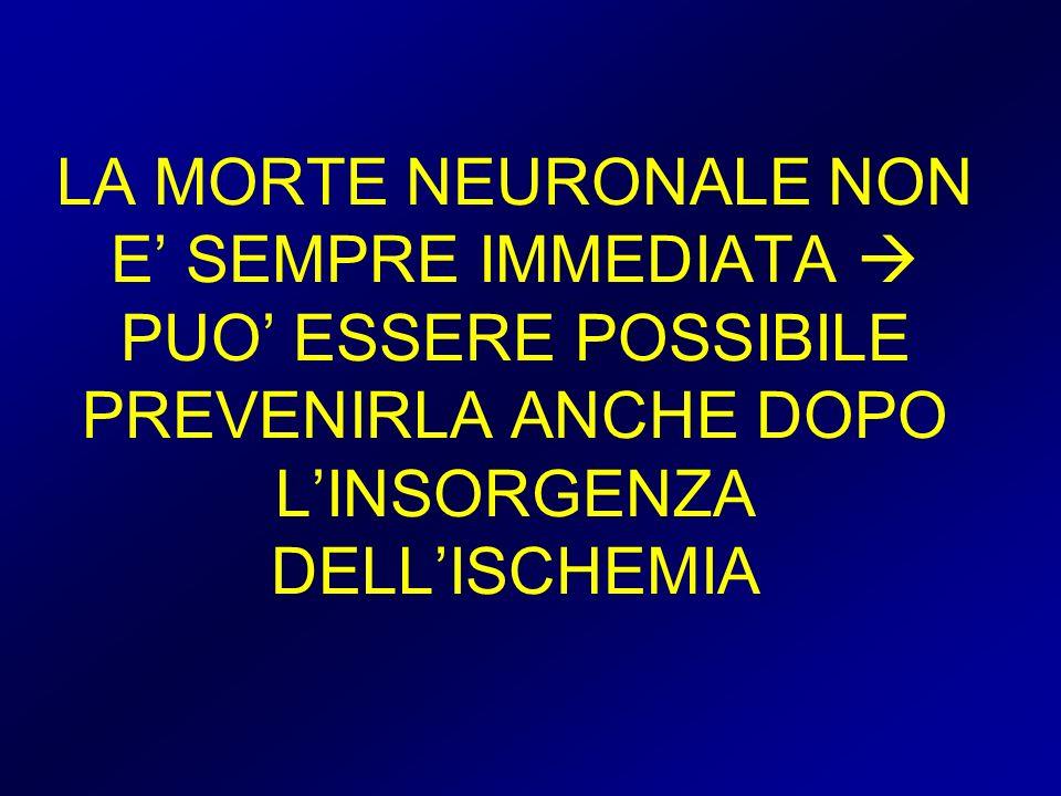 LA MORTE NEURONALE NON E SEMPRE IMMEDIATA PUO ESSERE POSSIBILE PREVENIRLA ANCHE DOPO LINSORGENZA DELLISCHEMIA