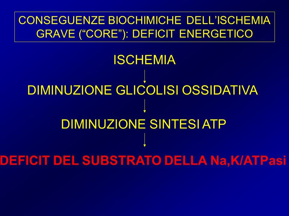 CONSEGUENZE BIOCHIMICHE DELLISCHEMIA GRAVE (CORE): DEFICIT ENERGETICO ISCHEMIA DIMINUZIONE GLICOLISI OSSIDATIVA DIMINUZIONE SINTESI ATP DEFICIT DEL SU