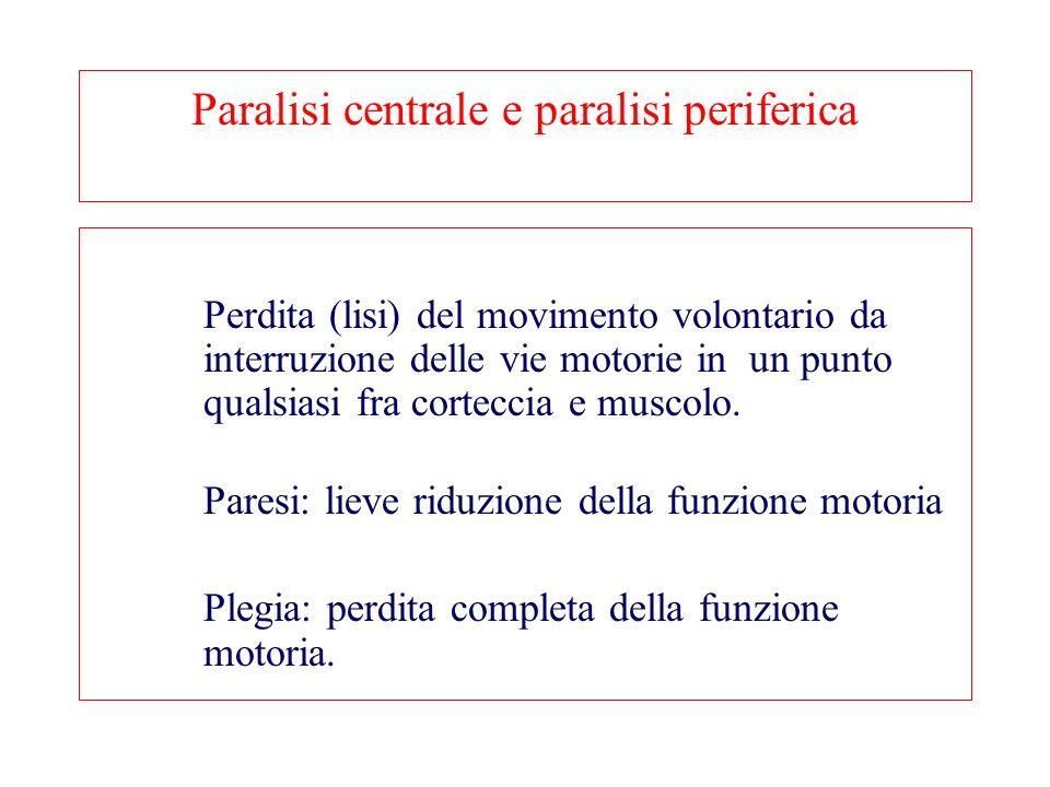 Paralisi centrale e paralisi periferica Perdita (lisi) del movimento volontario da interruzione delle vie motorie in un punto qualsiasi fra corteccia e muscolo.