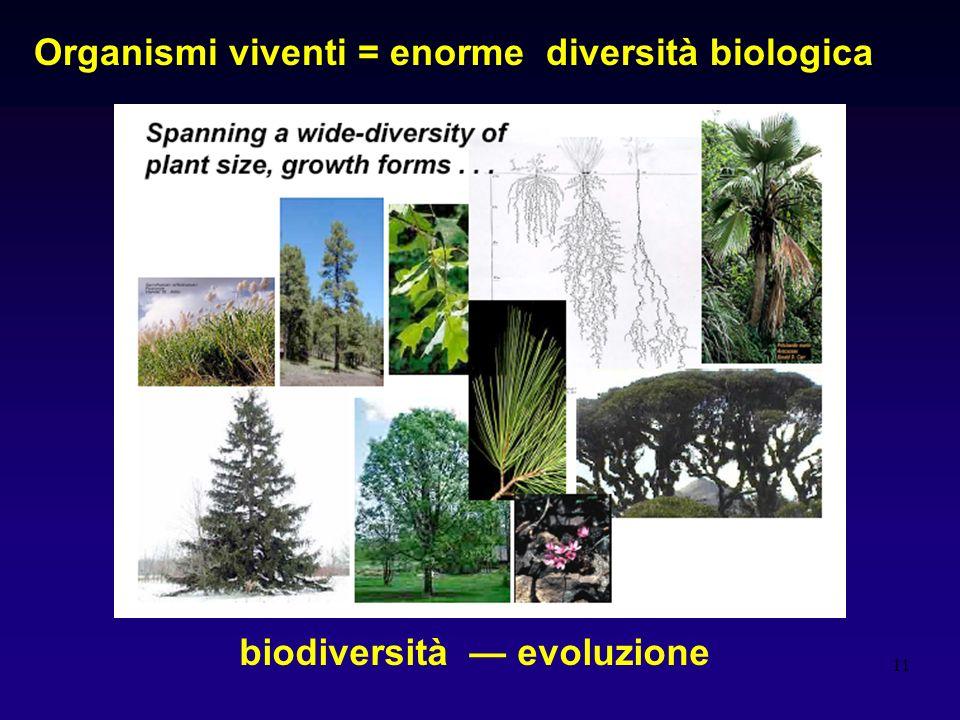 11 Organismi viventi = enorme diversità biologica biodiversità evoluzione