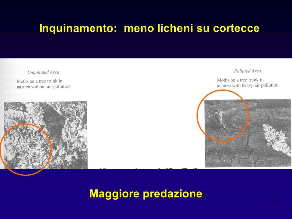 20 Inquinamento: meno licheni su cortecce Maggiore predazione