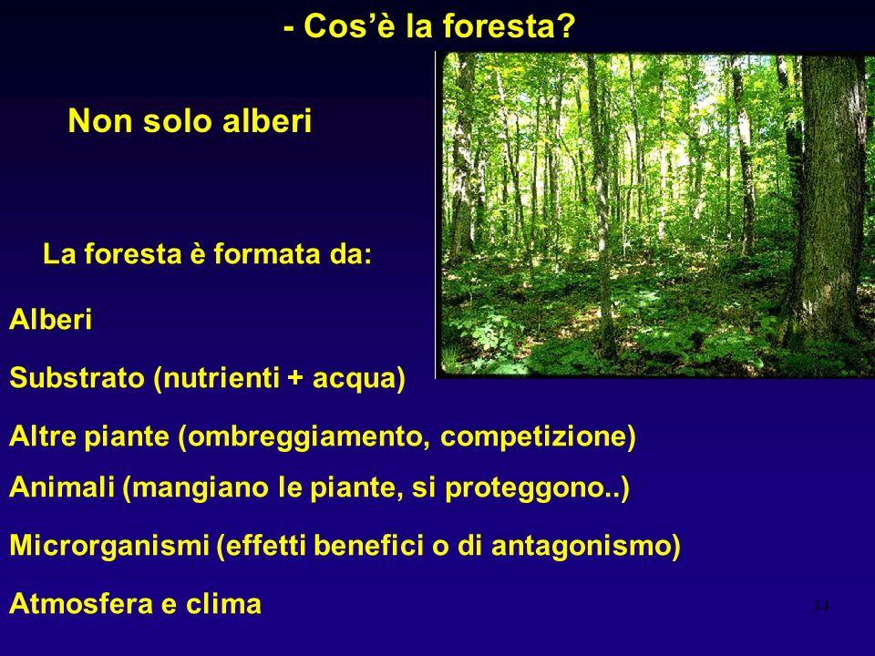 34 - Cosè la foresta? Non solo alberi La foresta è formata da: Alberi Substrato (nutrienti + acqua) Altre piante (ombreggiamento, competizione) Animal