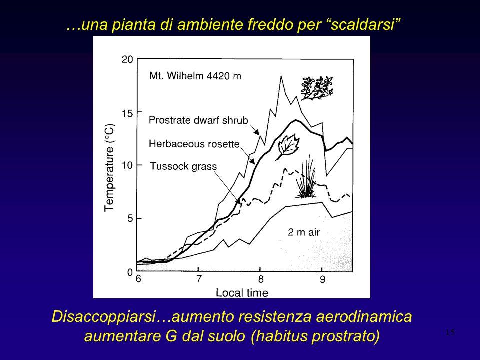 15 …una pianta di ambiente freddo per scaldarsi Disaccoppiarsi…aumento resistenza aerodinamica aumentare G dal suolo (habitus prostrato)