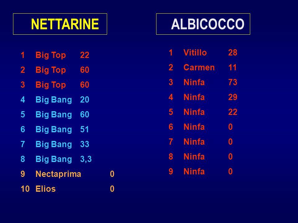 1Big Top22 2Big Top60 3Big Top60 4Big Bang20 5Big Bang60 6Big Bang51 7Big Bang33 8Big Bang3,3 9Nectaprima0 10Elios0 NETTARINE 1Vitillo28 2Carmen11 3Ninfa73 4Ninfa29 5Ninfa22 6Ninfa0 7Ninfa0 8Ninfa0 9Ninfa0 ALBICOCCO