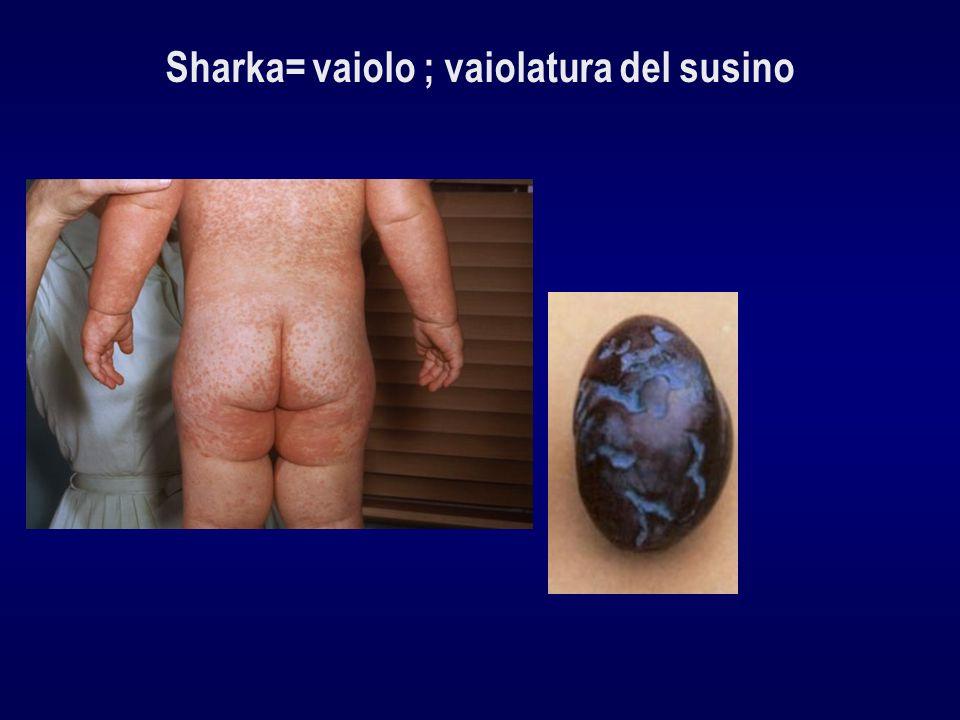 Sharka= vaiolo ; vaiolatura del susino
