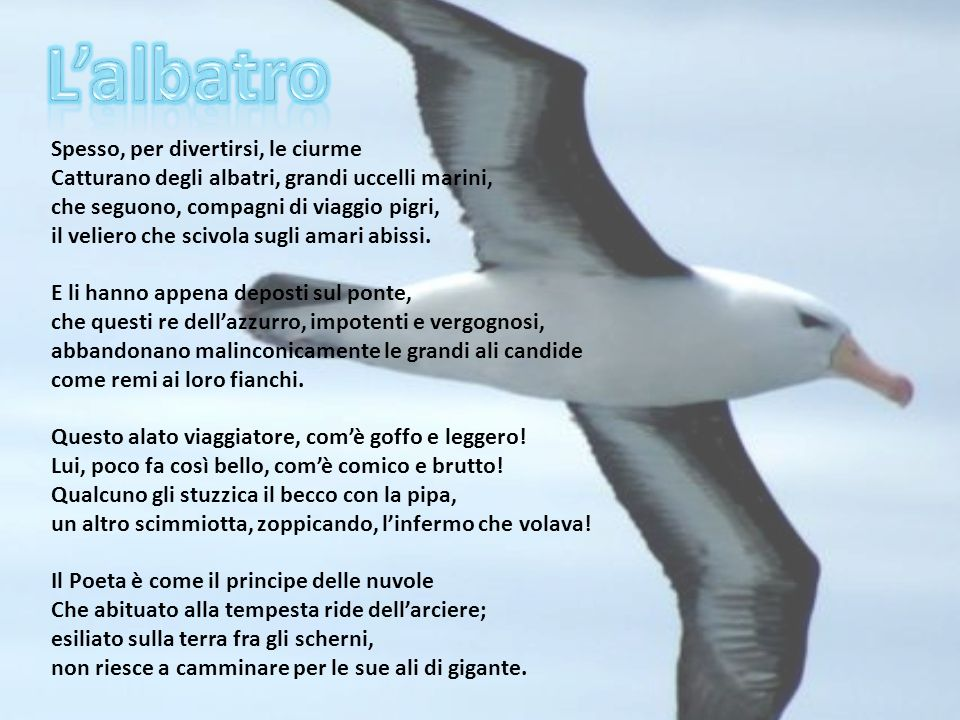 Spesso, per divertirsi, le ciurme Catturano degli albatri, grandi uccelli marini, che seguono, compagni di viaggio pigri, il veliero che scivola sugli
