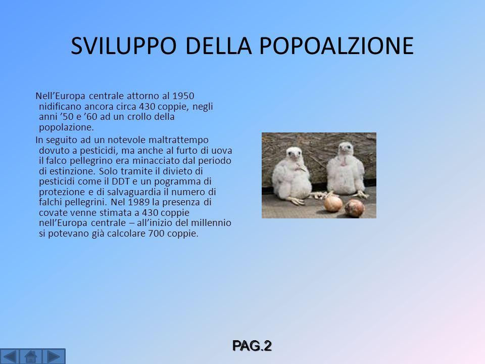 SVILUPPO DELLA POPOALZIONE NellEuropa centrale attorno al 1950 nidificano ancora circa 430 coppie, negli anni 50 e 60 ad un crollo della popolazione.