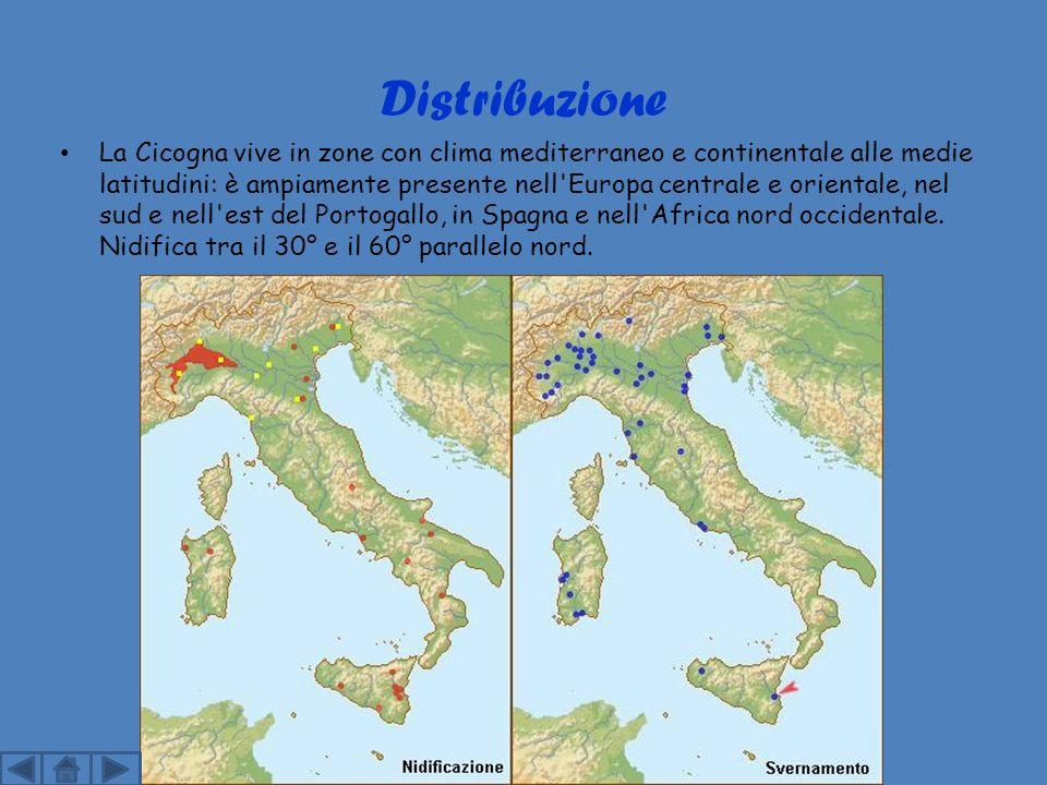 Distribuzione La Cicogna vive in zone con clima mediterraneo e continentale alle medie latitudini: è ampiamente presente nell Europa centrale e orientale, nel sud e nell est del Portogallo, in Spagna e nell Africa nord occidentale.