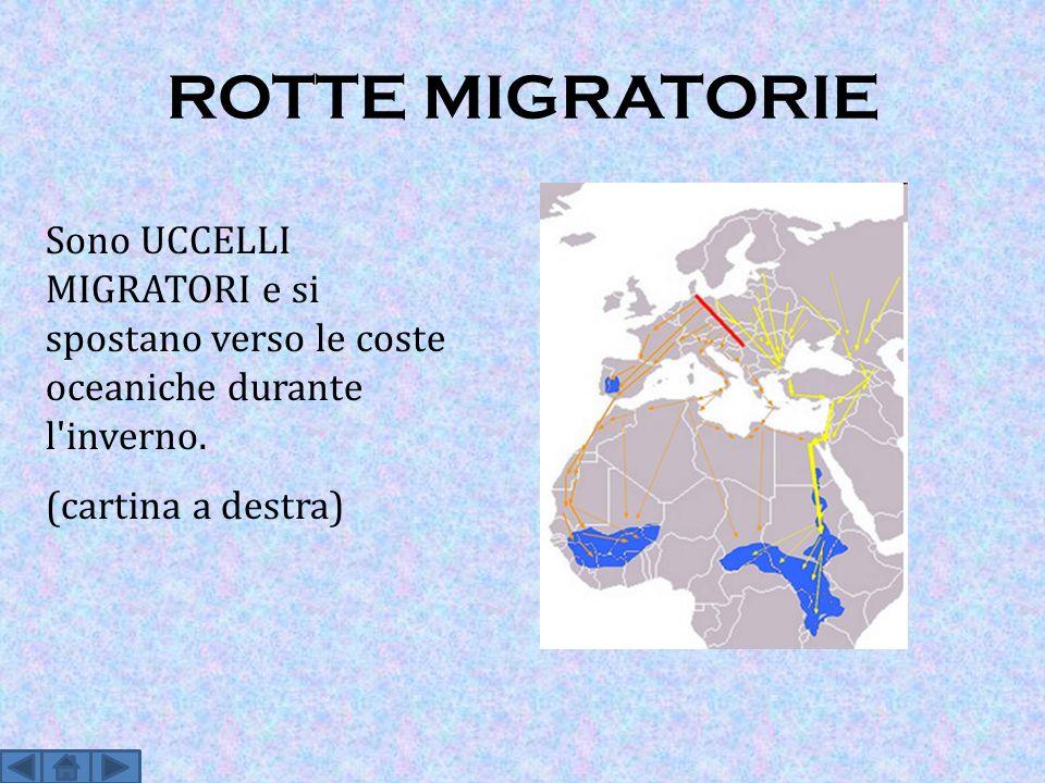 ROTTE MIGRATORIE Sono UCCELLI MIGRATORI e si spostano verso le coste oceaniche durante l'inverno. (cartina a destra)