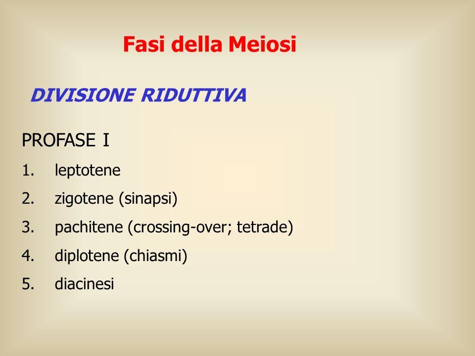 PROFASE I 1. leptotene 2. zigotene (sinapsi) 3. pachitene (crossing-over; tetrade) 4. diplotene (chiasmi) 5. diacinesi Fasi della Meiosi DIVISIONE RID