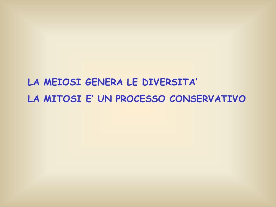 LA MEIOSI GENERA LE DIVERSITA LA MITOSI E UN PROCESSO CONSERVATIVO
