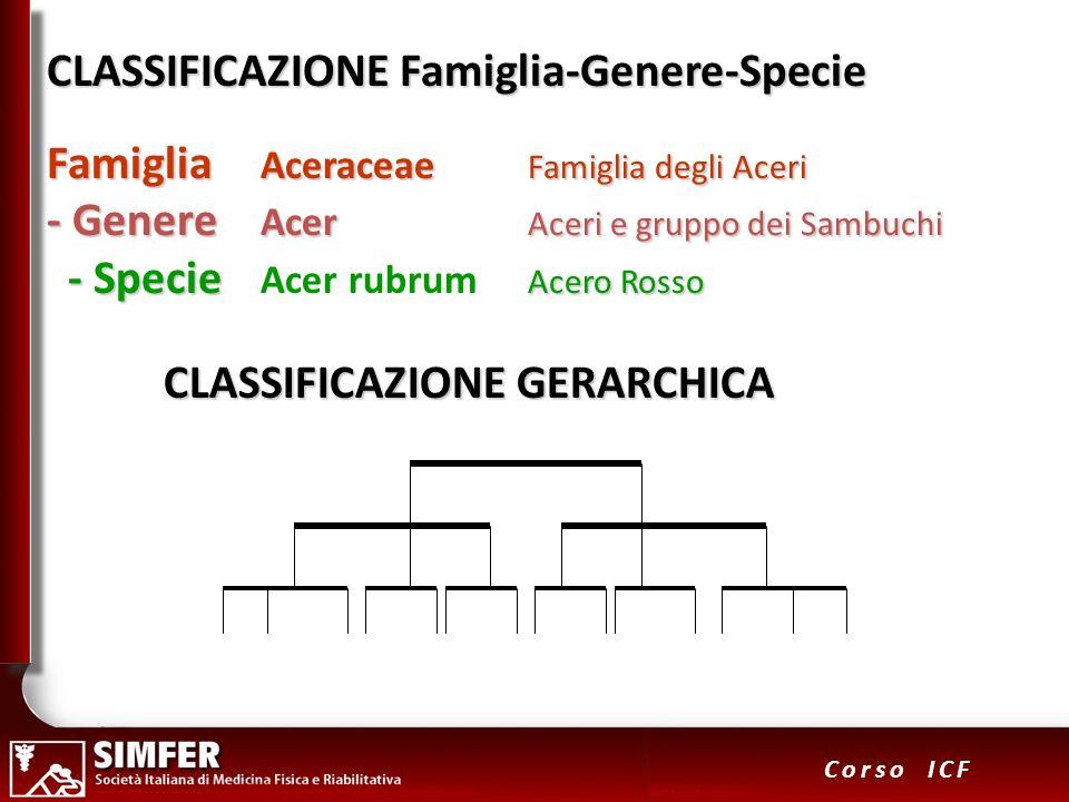 15 Corso ICF CLASSIFICAZIONE Famiglia-Genere-Specie Famiglia Aceraceae Famiglia degli Aceri Famiglia Aceraceae Famiglia degli Aceri - Genere Acer Acer
