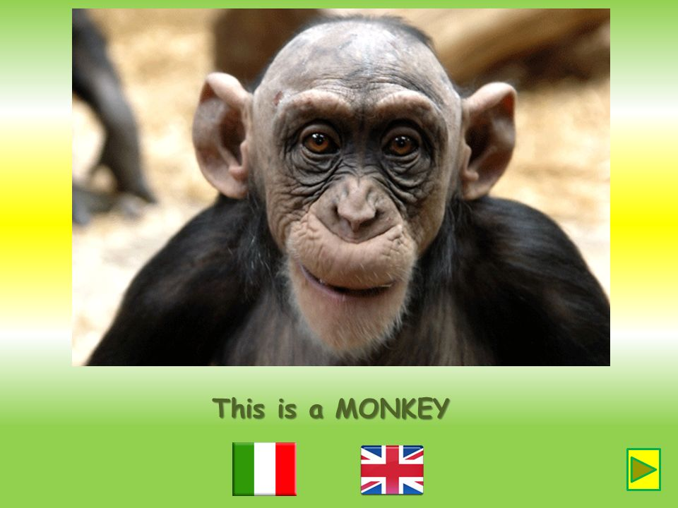 This is a MONKEY