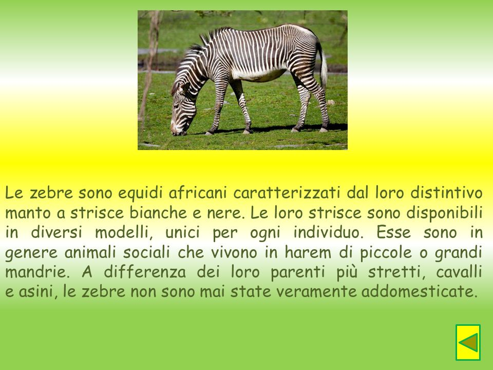 Le zebre sono equidi africani caratterizzati dal loro distintivo manto a strisce bianche e nere. Le loro strisce sono disponibili in diversi modelli,