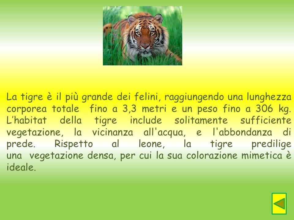 La tigre è il più grande dei felini, raggiungendo una lunghezza corporea totale fino a 3,3 metri e un peso fino a 306 kg. Lhabitat della tigre include