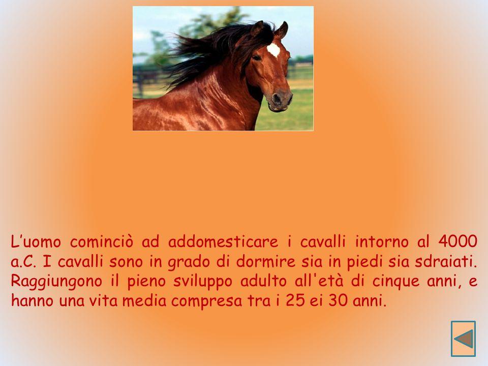Luomo cominciò ad addomesticare i cavalli intorno al 4000 a.C.