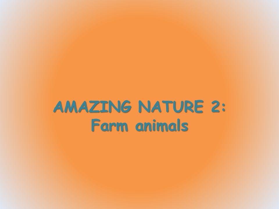Il tacchino è originario delle foreste del Nord America.